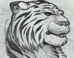 sketching a tiger with commentary step by step rainforest