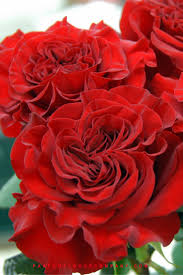 roses and hearts premium garden hearts