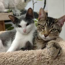 adoption u2013 paws humane society