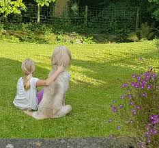 afghan hound attack if this happened to your new puppy what would you do