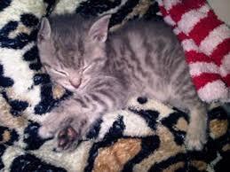 kitten pictures keeping kittens