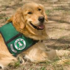 Comfort Dogs Certification Training Your Dog To Be A Therapy Dog American Kennel Club