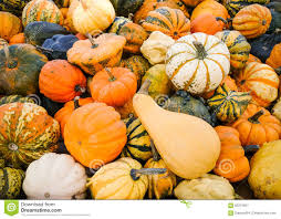 colorful ornamental gourds top view stock image image 60213551