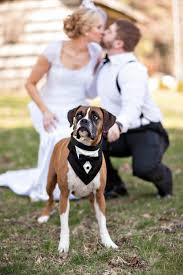 boxer dog 2015 diary best dog nash daily dog tagdaily dog tag