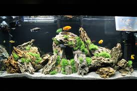 most beautiful freshwater tanks 2015 ratemyfishtank