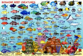 use the form below to delete this compact guide to bonaire reef