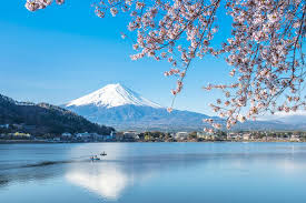 5 of the best places to see cherry blossom in japan london