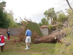 my dear trash a tornado in my own backyard