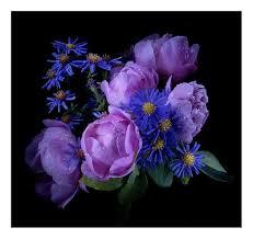 flower dark painting black peonies yellow flowers purple color