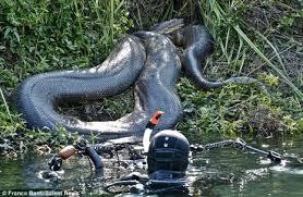 vidio film ular anaconda mengejutkan ular raksasa dan terbesar di dunia no 1 unik