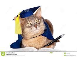 dog graduation cap and gown graduation cap stock photos sign up for free