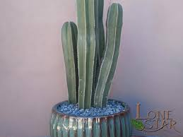 Glazed Ceramic Pots Mexican Fence Post Cactus Stenocereus Marginatus In Glazed