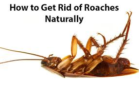 How To Get Rid Of Roaches In The Bathroom How To Get Rid Of Cockroaches Permanently