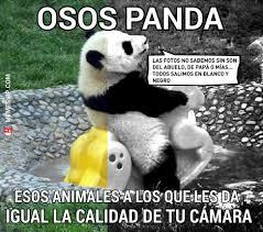 Memes De Pandas - meme oso panda memes en español memesvip com