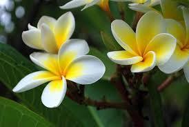 this week s hawaii arbor day festivities feature hawaiian
