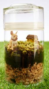 blog make a terrarium with our large glass jars