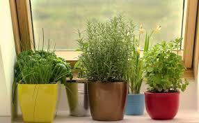sumptuous indoor kitchen garden modest ideas amazing diy indoor