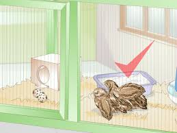 how to care for quail with pictures wikihow
