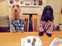 dogs at dinner table my friends 2 dogs in shirts sitting at the dinner table rebrn com