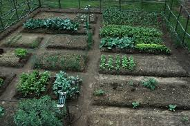 fresh ideas how to plant a vegetable garden modest decoration how