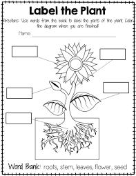 worksheets about plants u2013 wallpapercraft