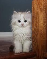 s e katzen spr che cats katzen cats cat animal and kitten