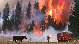 California Wildfire October 2007 by Nearly Half Of Western Wildfire Costs Go To California Soper