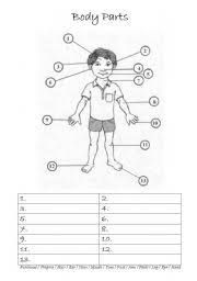 spanish body parts worksheet free worksheets library download