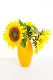 Vase Of Sunflowers Sunflowers In A Yellow Vase Isolated On White Stock Photo