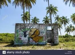 graffiti palm trees stock photos graffiti palm trees stock small abandoned building with graffiti in tropical scenery with palm trees boipeba island bahia