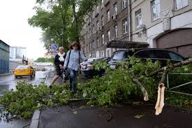 trees in june abnormal weather conditions shock russia