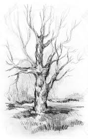 pencil sketch of tree without leaves tree without leavesilinea on