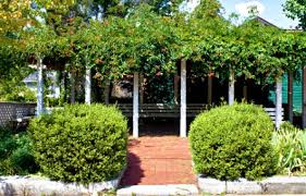 Vertical Garden Trellis - vertical gardening innovative solutions for small gardens