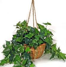 une plante dans une chambre voici 8 plantes pour votre chambre qui vous aideront à mieux dormir