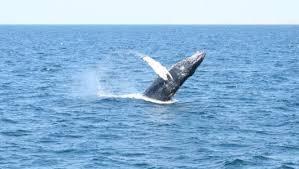 Whale Watches Cape Cod - cape cod
