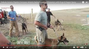 belgian sheepdog breeders ontario exposed ashley nicole welsh revisted fakeindians