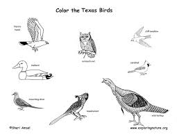 texas bird coloring page kids drawing and coloring pages marisa