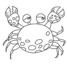 Crab Coloring Pages Hellokids Com Crab Coloring Page