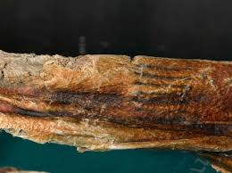 oldest found marks on iceman otzi proved to be