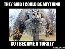 Funny Owl Meme - turkey meme the owl turkey meme by memecomedy on deviantart