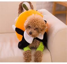 Cheap Dog Costumes Halloween Aliexpress Buy Funny Pumpkin Dog Costumes Halloween