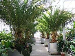 Quail Botanical Gardens Free Tuesday Us Botanic Garden R R For Plants Gardendesignonline