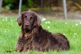 companion animals news u0026 facts by world animal foundation