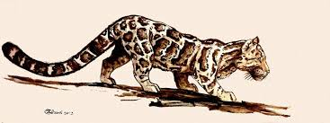 clouded leopard sketch by bisanti on deviantart