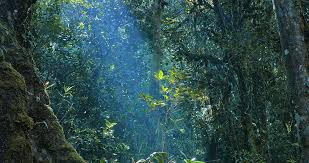 river stream in deep forest with sunlight through canopy leaves
