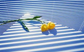 download wallpaper 3840x2400 tulips flowers two window blinds
