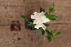 high camp gardenias austin wedding roses hardback sheilahight decorations
