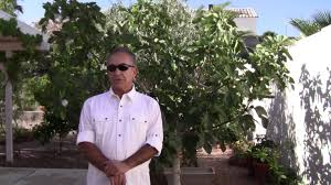 how to keep birds away from patio how to protect your fig trees from birds revolutionary new idea