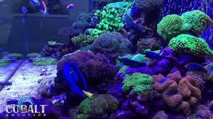 reef tank at aquarium design group side youtube