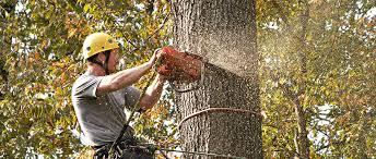 tree removal stump removal corning ny